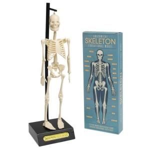 Rex London - anatomiczny model szkieletu (Z2480)